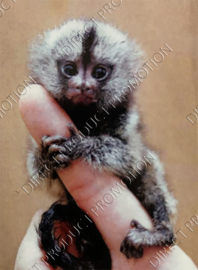 "Diamond painting ""Baby monkey"""