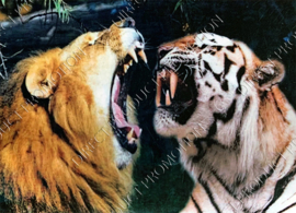 "Diamond painting ""Lion and tiger"""