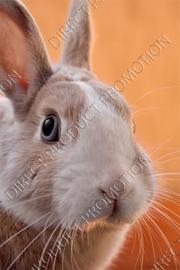"Diamond painting ""Rabbit"""