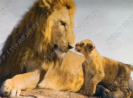 "Diamond painting ""Lion and cub"""