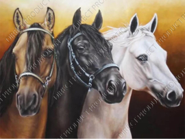 "Diamond painting ""Three arab horses"""