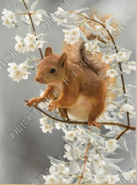 """Diamond painting """"Squirrel on blossom branch"""""""