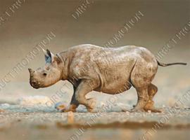 """Diamond Painting """"Rhino"""""""