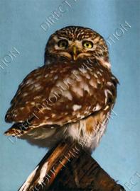 """Diamond painting """"Little Owl"""""""