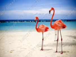 """Diamond painting """"Flamingos"""""""