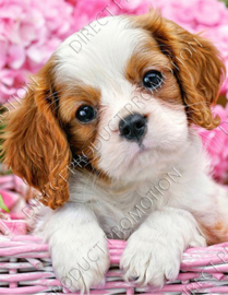"Diamond painting ""Cavalier King charles puppy"""