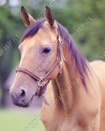 "Diamond painting ""Brown horse"""