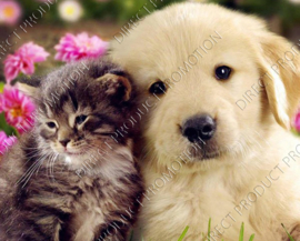 "Diamond painting ""Labrador puppy with kitten"""