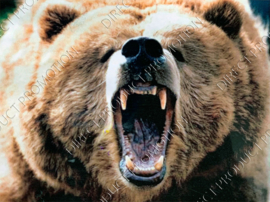 "Diamond painting ""Roaring bear"""