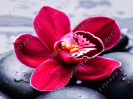 "Diamond painting ""Orchid"""