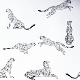 Inpakpapier | Jaguar metallic