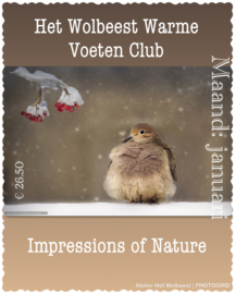 Maand januari - Impressions of Nature