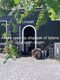 Showroom Livsstil