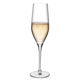 Vinefera champagne glas (6 stuks)