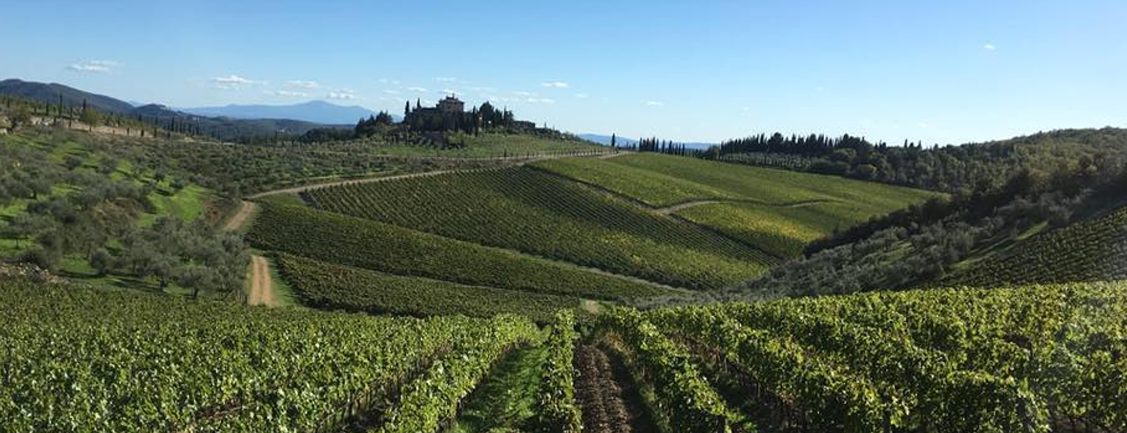 Country Wine | vineyards