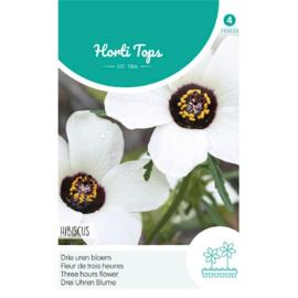 Hibiscus Drie uren bloem