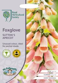 Foxglove Sutton´s Apricot