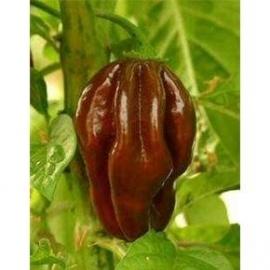 Hete Peper Habanero Chocolate