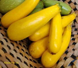 Courgette Yellow Golden