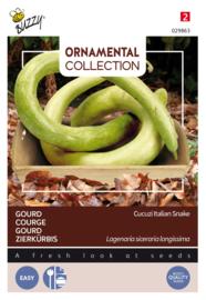 Gourd Cucuzi Italian Snake