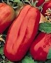 Tomaat San Marzano 2
