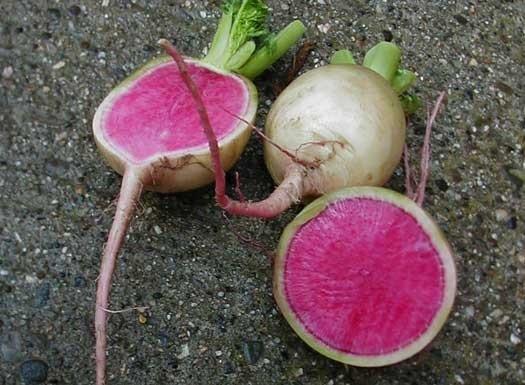 Radijs Watermelon