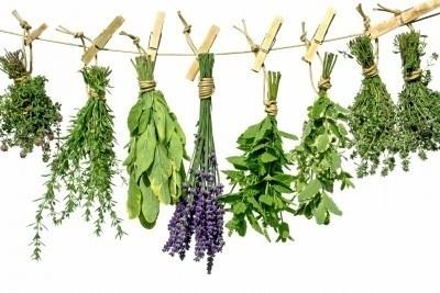 Logo-zakjes met groente-, fruit- of kruiden zaden