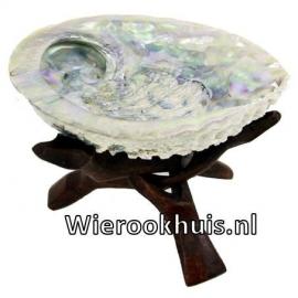 Abalone schelp  - circa 14/15 centimeter