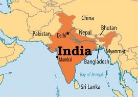 India Monsooned Malabar AA koffiebonen