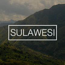 Koffiebonen uit Sulawesi