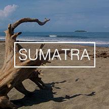 Koffiebonen uit Sumatra