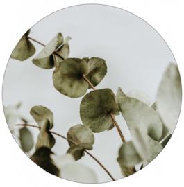 Muurcirkel | eucalyptus 20cm