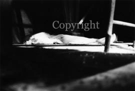 Dead (work 4)