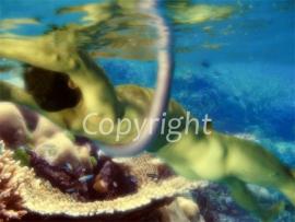 Under Water (work 8)