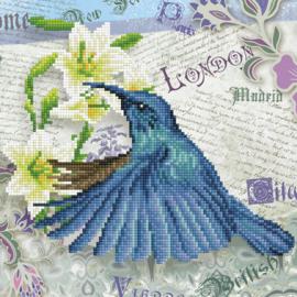 Diamond painting Hummingbird Travels