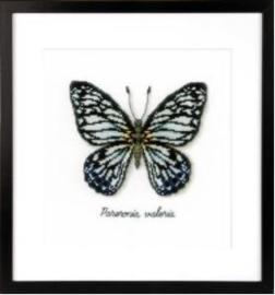 Blauwe vlinder Aida