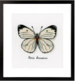 Witte vlinder Aida