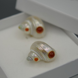 Turbo shells en carnelian