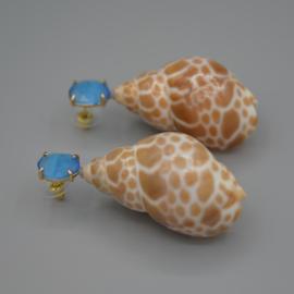 Cateye en shell
