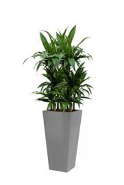 Dracaena Janet Craig + vierkante hoogglans kunststof plantenbak L35xB35xH70 (zilver)