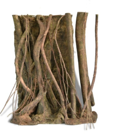 Tropical Forest Roots