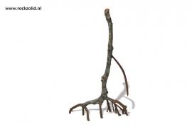 Mangrove Wortels E