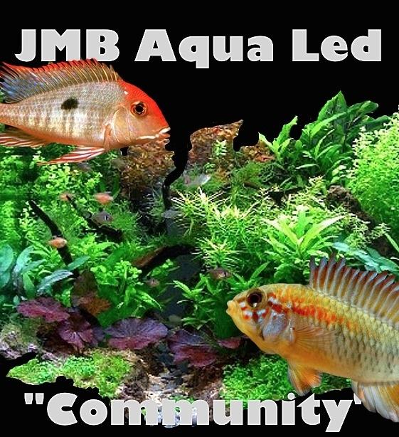 "JMB - ""SMD"" - Community - WIT / ROOD -"