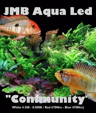 """JMB Aqua Led """"COMMUNITY"""" - WIT / BLAUW"""