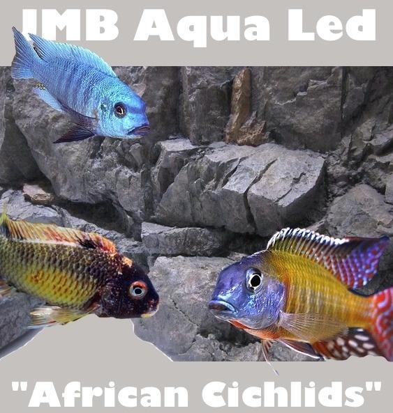 "JMB - ""SMD"" - African Cichlids -"