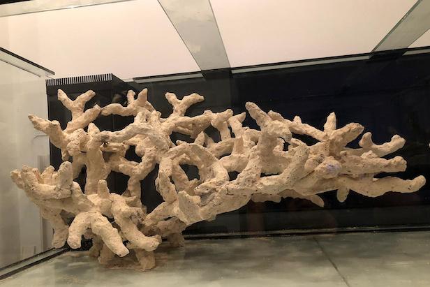 RiffKeramik -Branches- circa 20CM tot 50CM