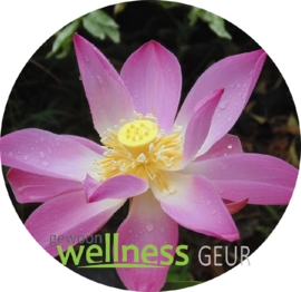 Lotus verstuifolie
