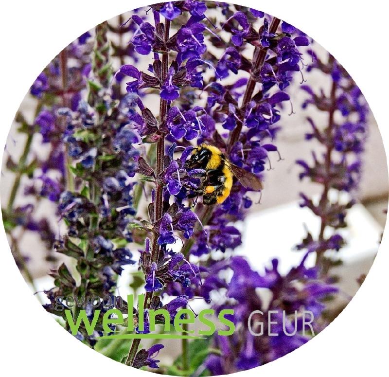 Lavenflower verstuifolie