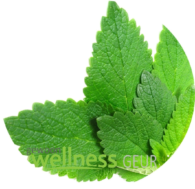 Melisse/Eucalyptus verstuifmix 100% PUUR EM
