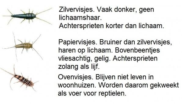 informatie over zilvervisjes